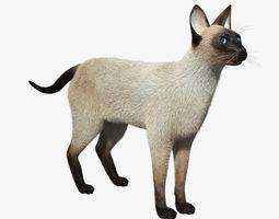 Siamese Cat FUR 3D Model