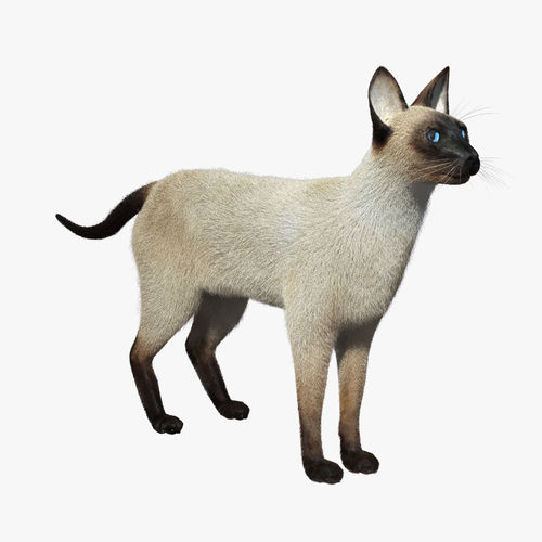siamese cat 3d model - photo #2