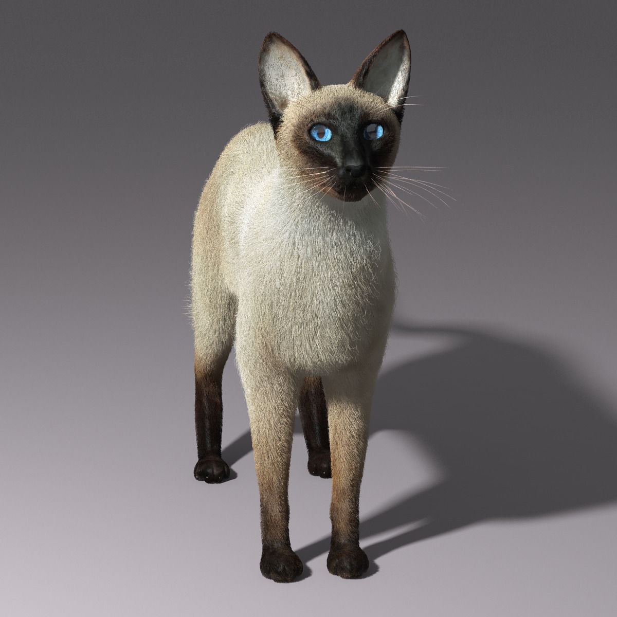 siamese cat 3d model - photo #1