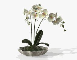 Orchidaceae 3D pot-plant