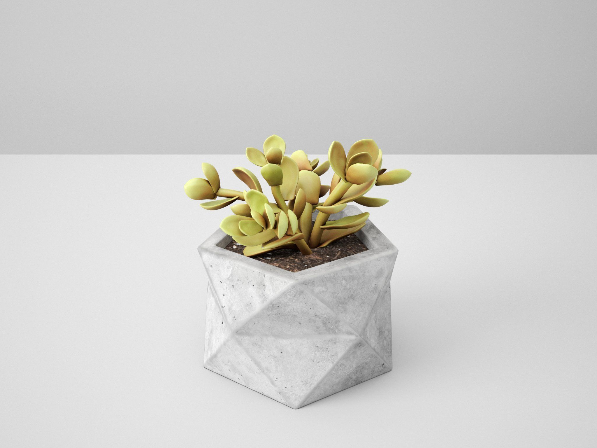 Polyhedral Concrete Potted Cactus