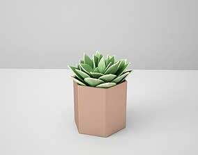 3D model Succulent Echeveriar Star Copper Potted