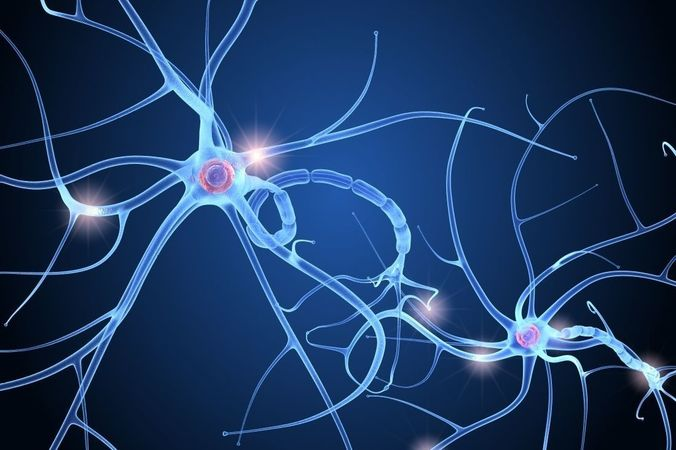 Nerve cell anatomy
