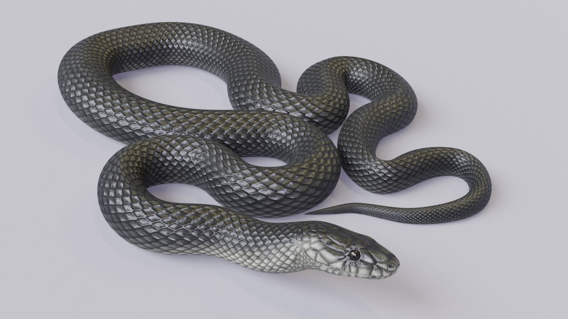 Animated Black Mamba