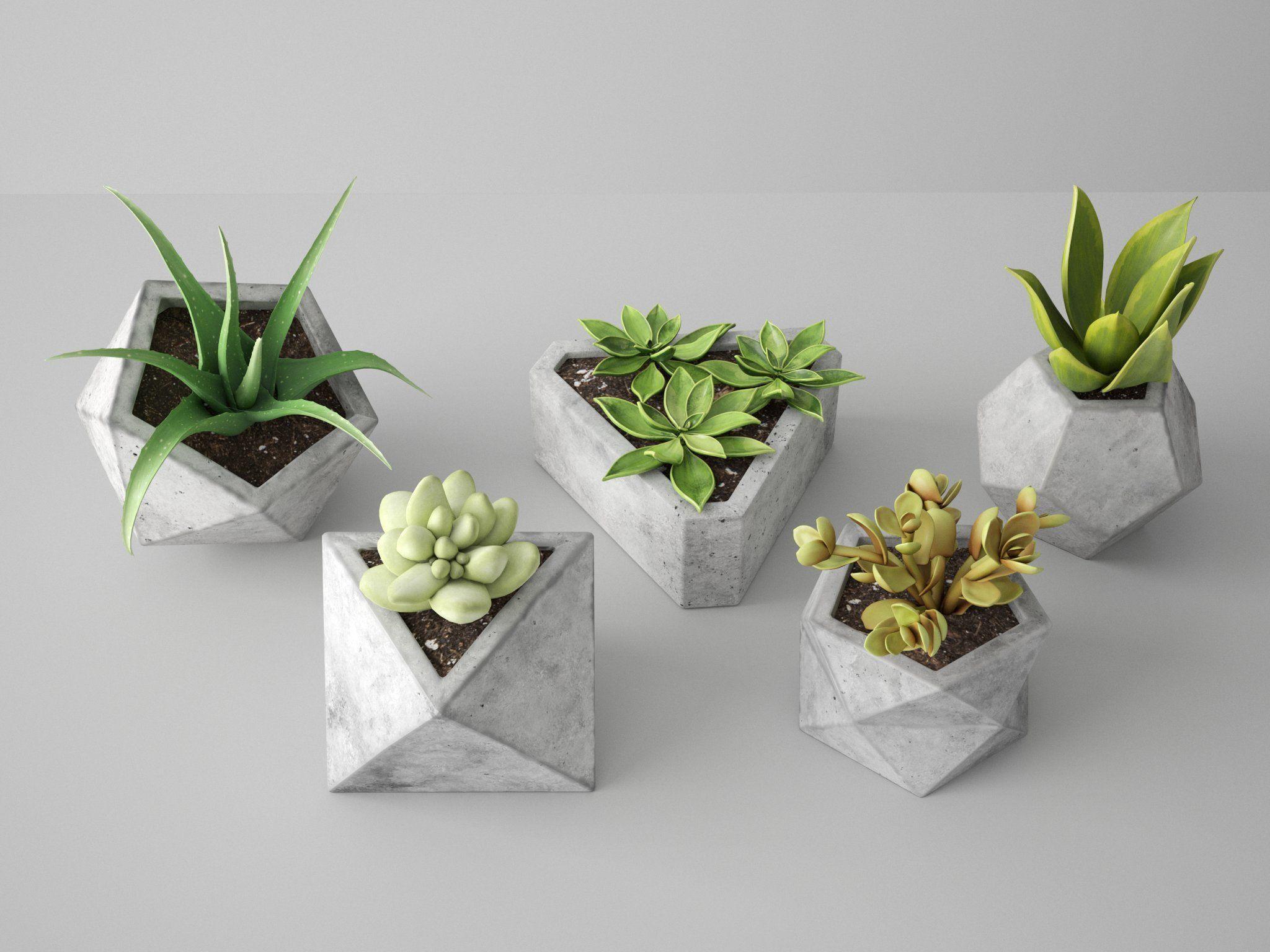 Concrete Potted Cactus Set
