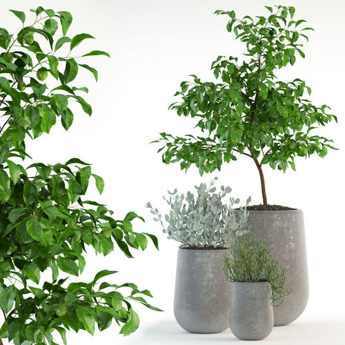 Plants Collection 82 Garden Life Pots 3D Model