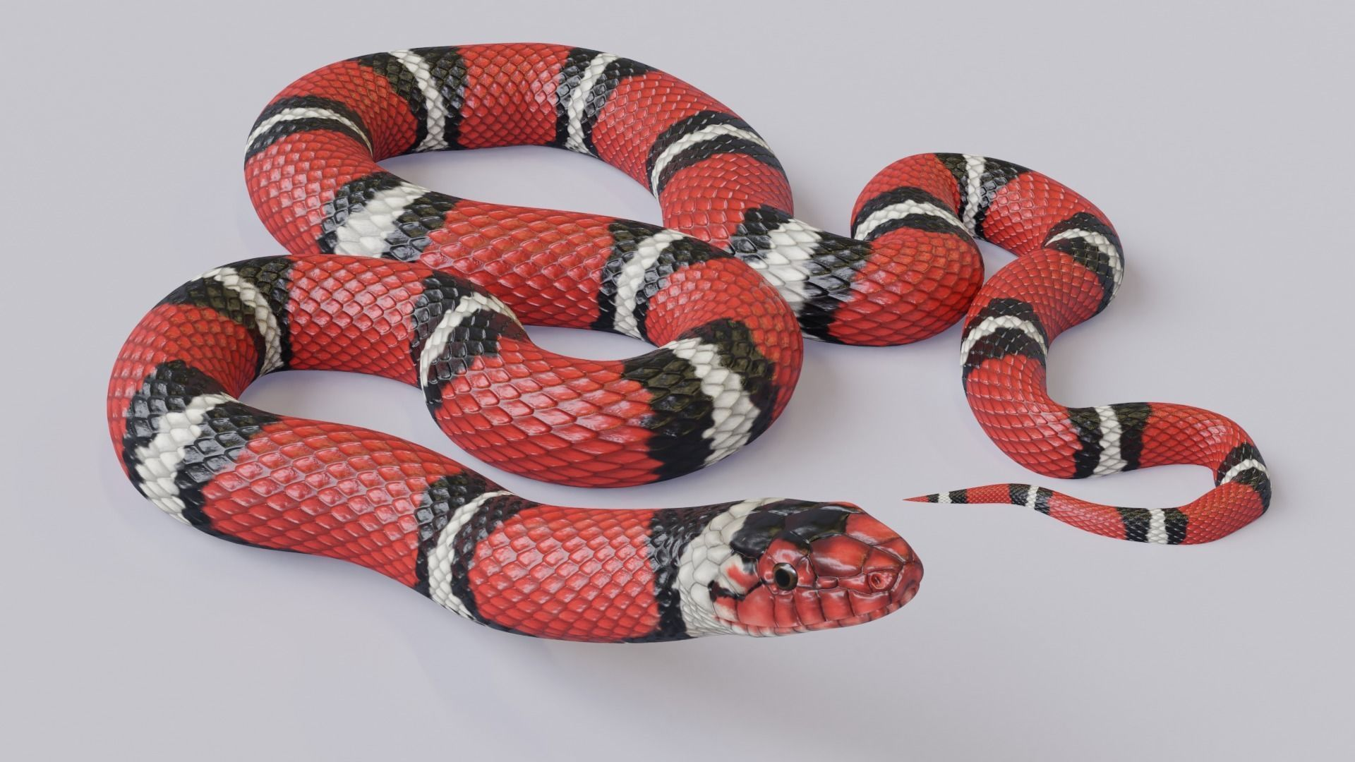 Animated Scarlet Kingsnake