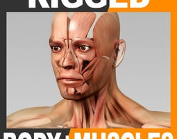 Rigged Human Male Body and Muscular System 3D Model