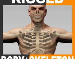 Rigged Human Male Body and Skeleton 3D Model