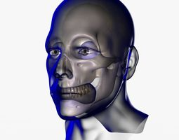 3D model X-Ray Male Face Unrigged