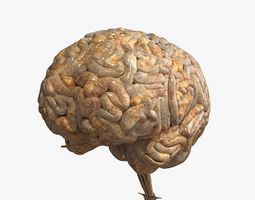3D model Realistic Human Brain