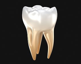 Human molar tooth 3D model