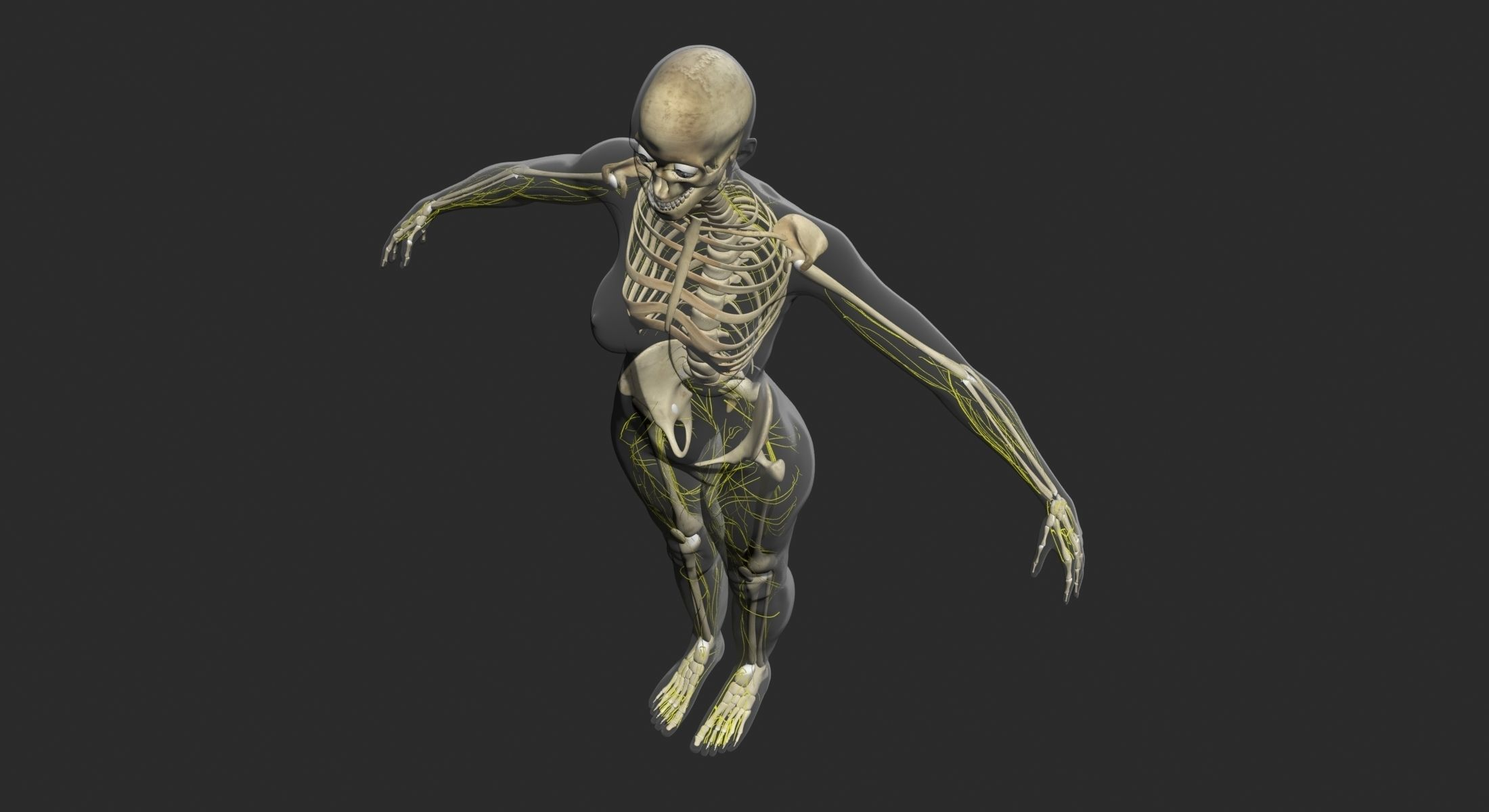 Male Central Nervous System With Skeleton 3DSmax