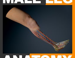 human male leg anatomy 3d model max obj 3ds fbx c4d lwo lw lws