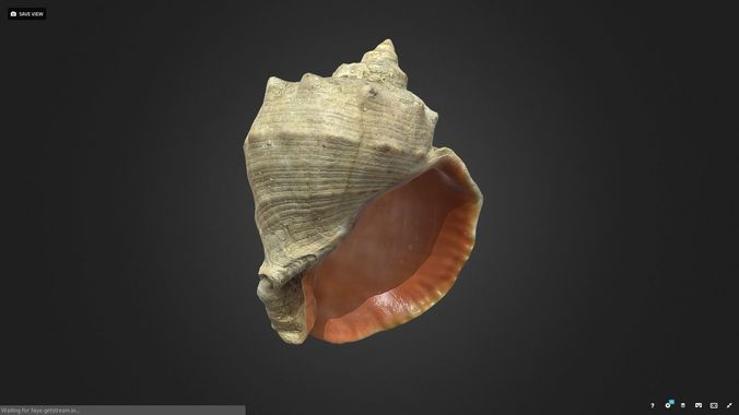 shell 3d model obj mtl 1