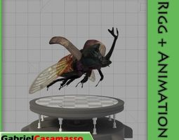 Rhinoceros Beetle 3D asset