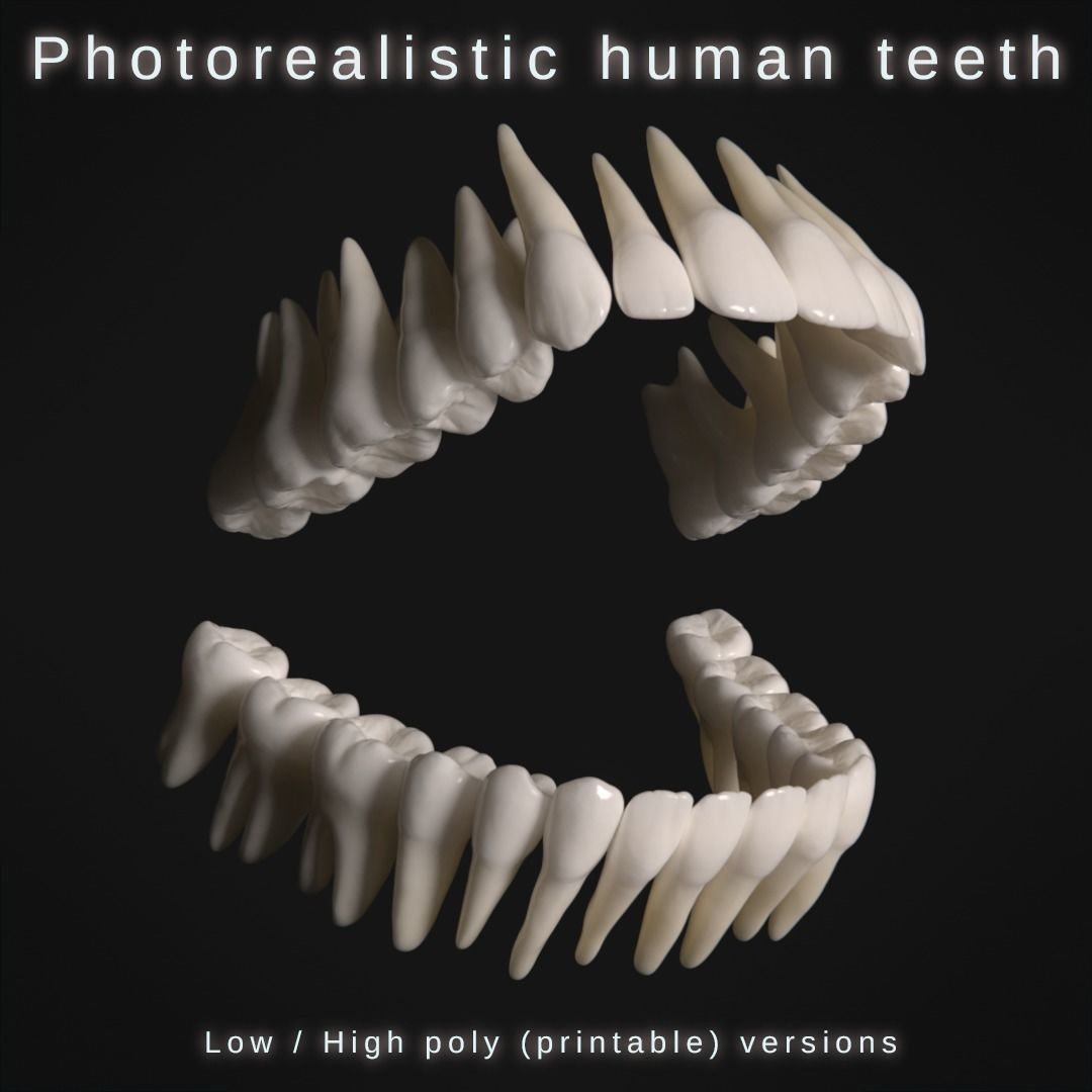 Photorealistic human teeth