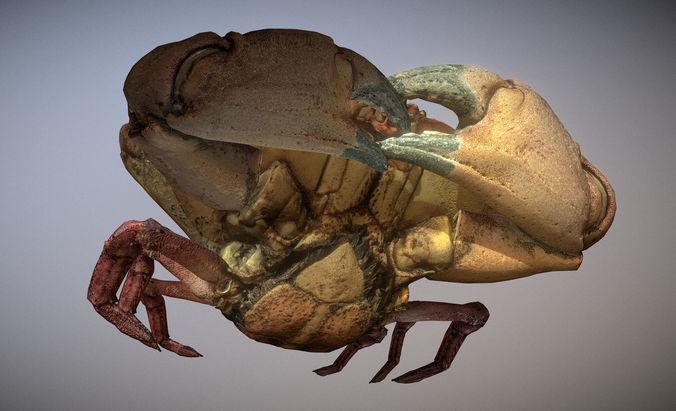 scanned photorealistic crab 3d model low-poly max obj mtl fbx ma mb 1