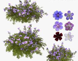 3D model Geranium garden
