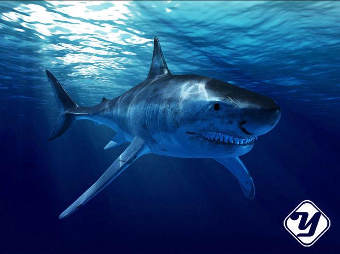 great white shark model 3d model rigged max fbx ma mb 1
