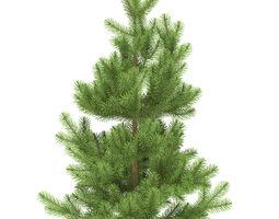 3D model Pine height 1 metre