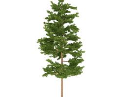 pine height 3 metre 3d model