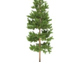 3D Pine height 5 metre