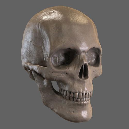 skull stl 3d model stl 1