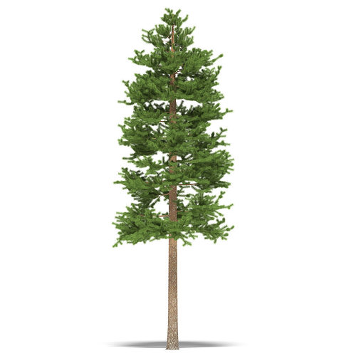pine height 15 metre 3d model max obj mtl fbx 1