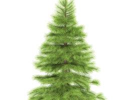 3D model Spruce height 1 metre