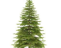 3D Spruce height 3 metre