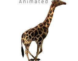 3D asset Realtime Running Savannah Giraffe