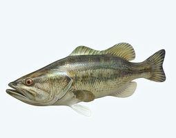 Mangrove Jack Fish 3D