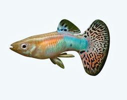 guppy 3D model Guppy Fish