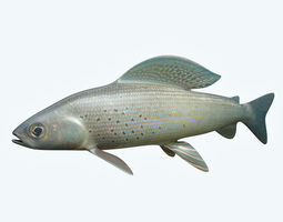 Grayling Fish 3D model