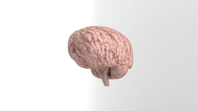 low-poly brain model 3d model low-poly obj mtl fbx stl blend dae tga 1