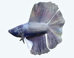 Betta Fish 3 3D model