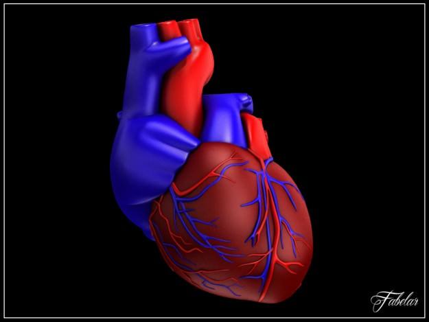 Human heart vray 3d cgtrader human heart vray 3d model max mat 10 ccuart Images