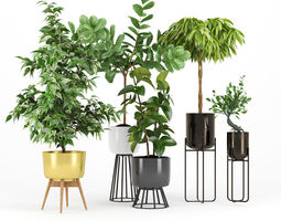 Ficus Set two 3D