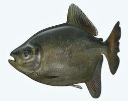 3D model Bawal Fish