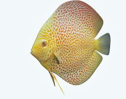3d model discus fish 5