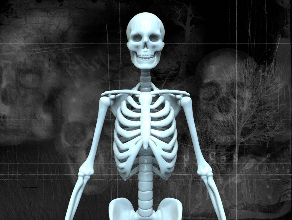 Human Skeleton 3d Model Maya Free Download - wearlivin