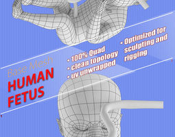 human fetus 3D asset game-ready