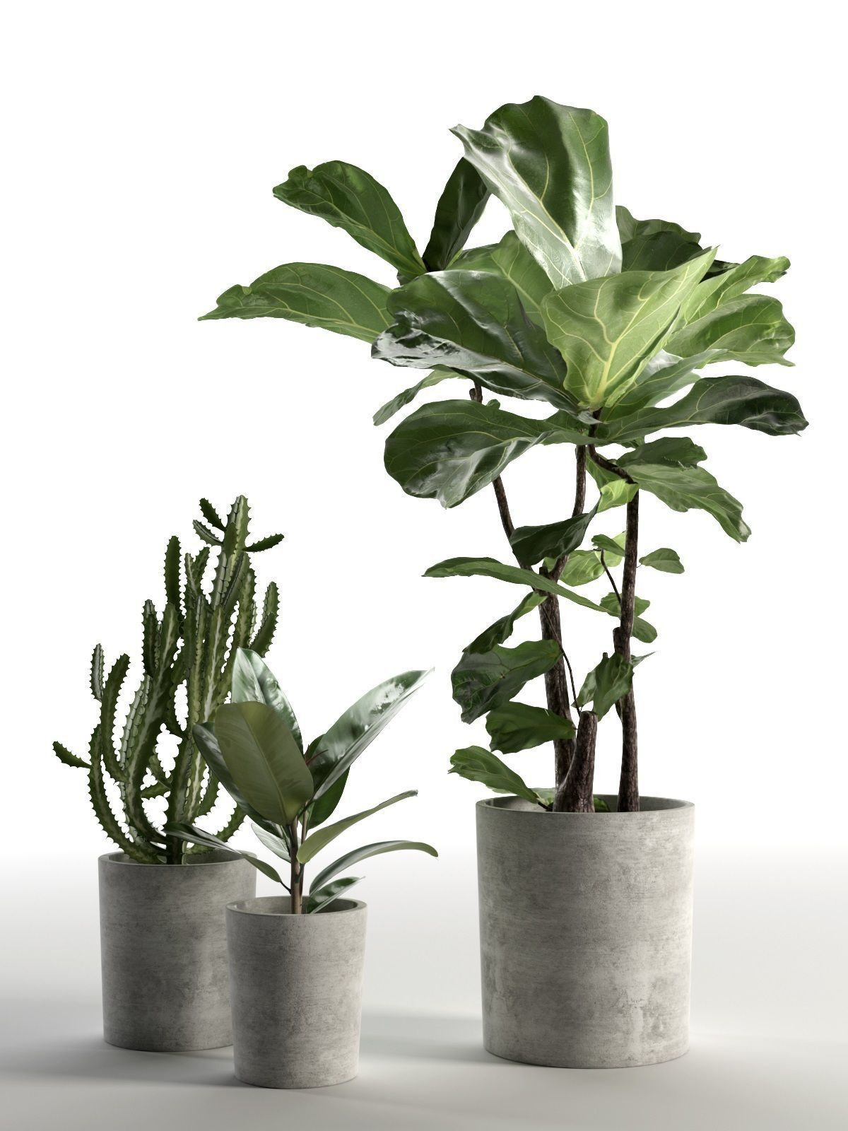 Cactus and Ficus in Pots