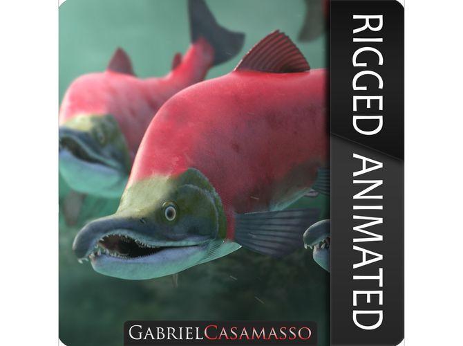 oncorhynchus nerka - the red sockeye salmon 3d model rigged animated obj mtl fbx c4d blend 1