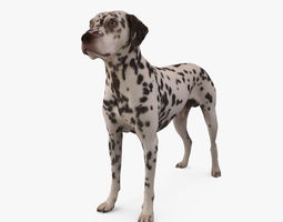 low-poly dalmatian 3d asset