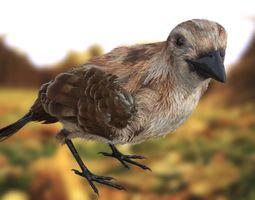 sparrow 3D