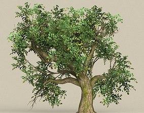 3D model Game Ready Tree 09