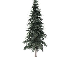 Spruce Tree 6point4m 3D
