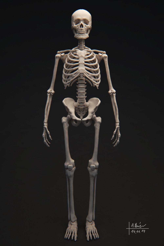 Human Skeleton 3d Cgtrader